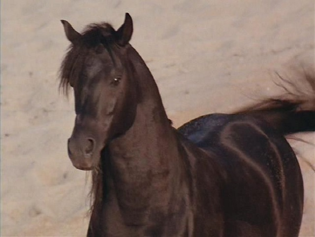 horsesense4